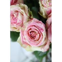 Le bouquet Paloma